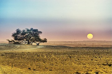 L'arbre de vie du Barhein