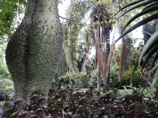 Le Ceiba Speciosa